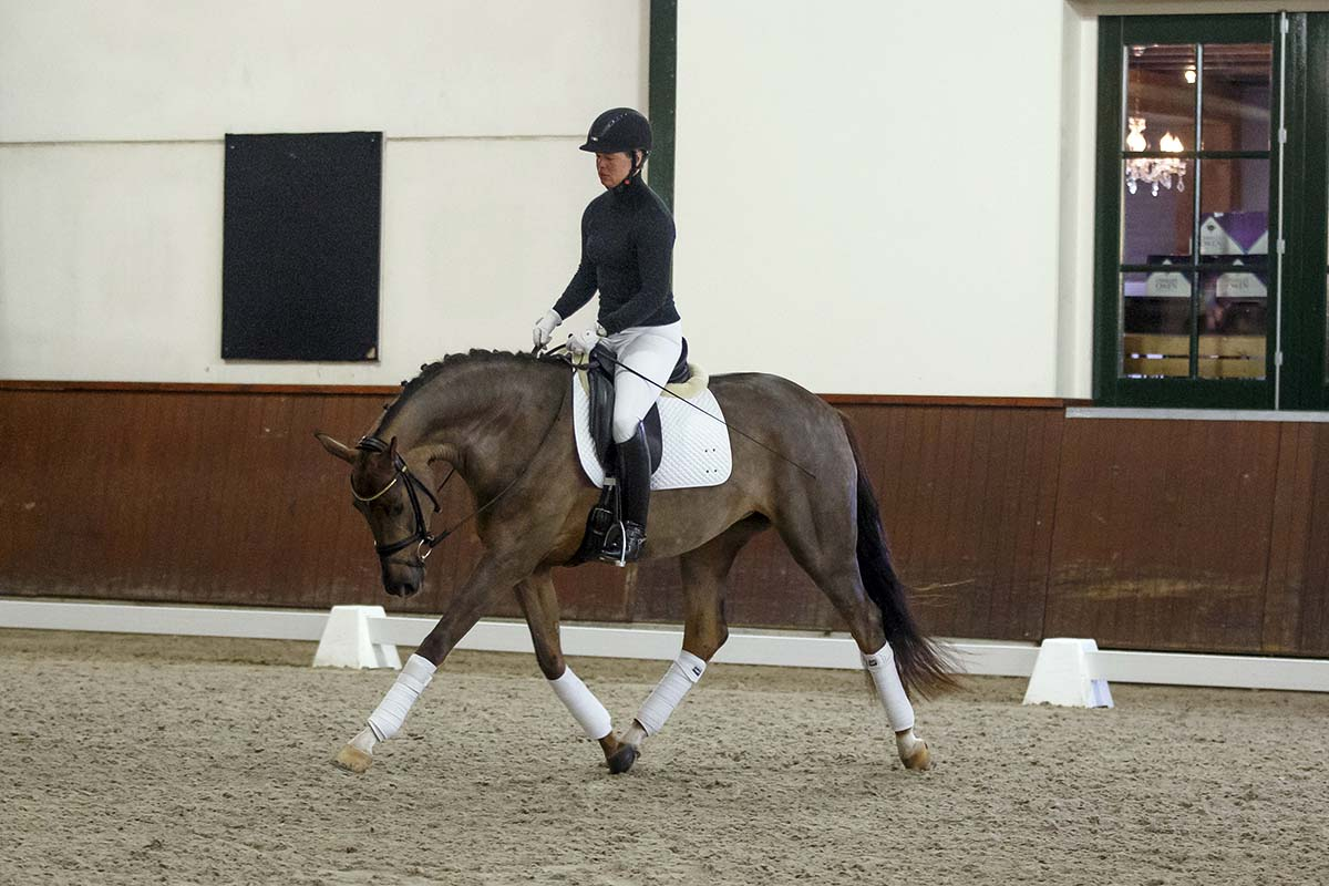 Several highlights - Global Dressage Forum - 2015 edition